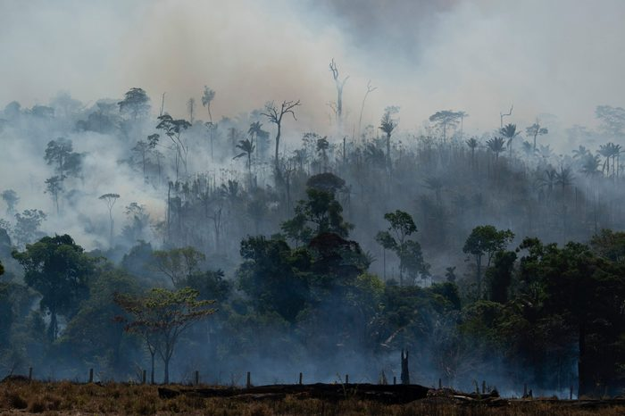amazon rainforest fire burns in brazil