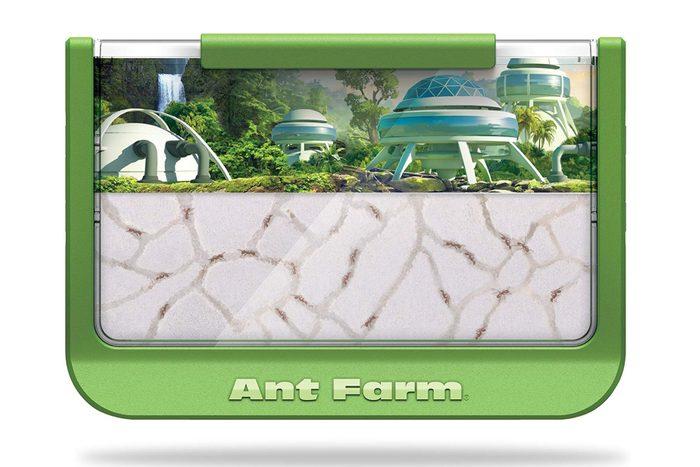 aunt farm