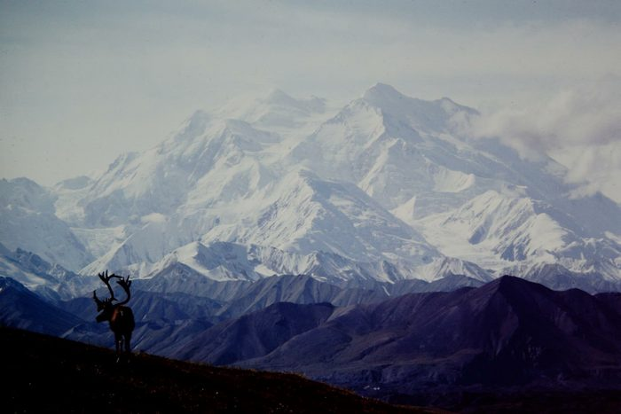 Denali National Park, with caribou in foreground.
