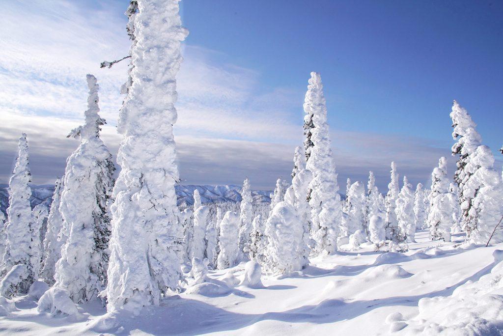 alaska scenery winter snow
