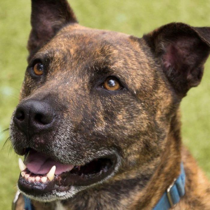 charley senior dog