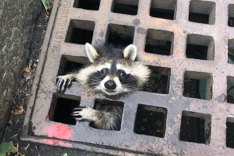 newton fire department saves raccoon