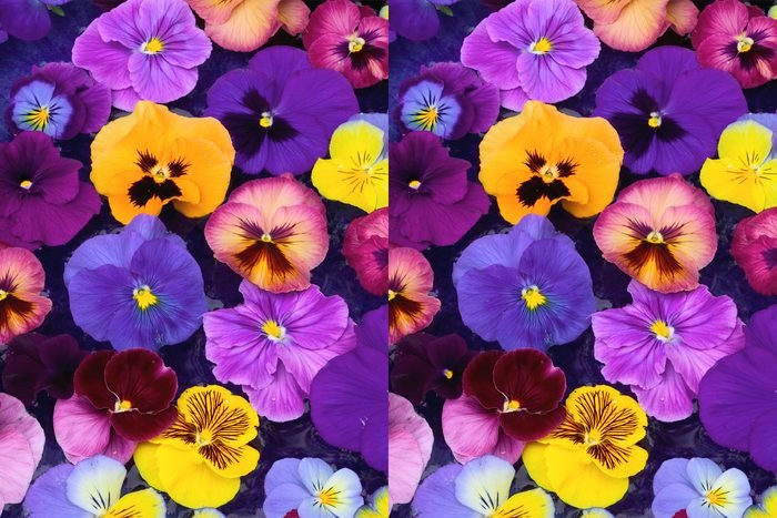 Find The Differences in the pansies