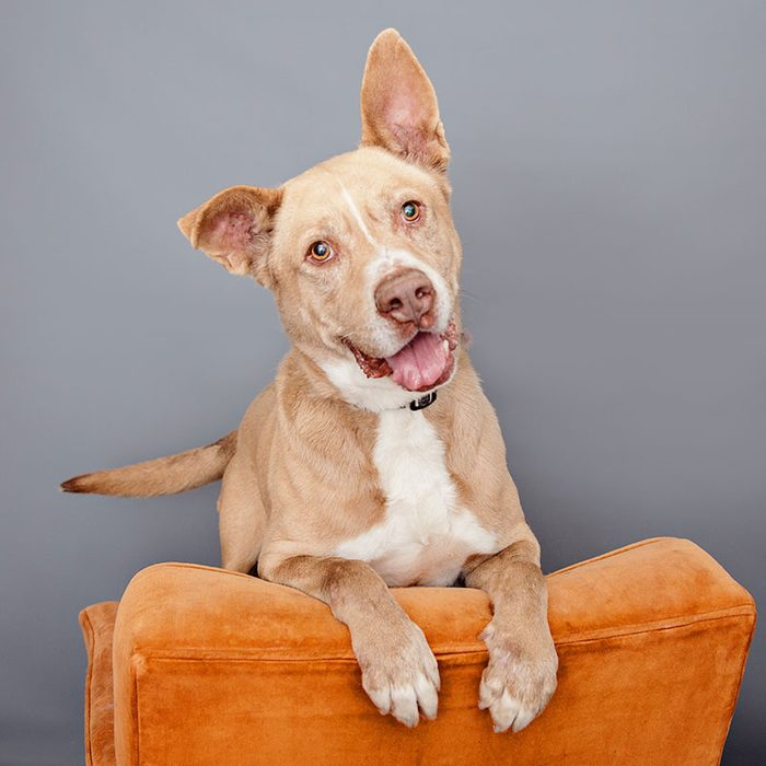 Hugo senior dog