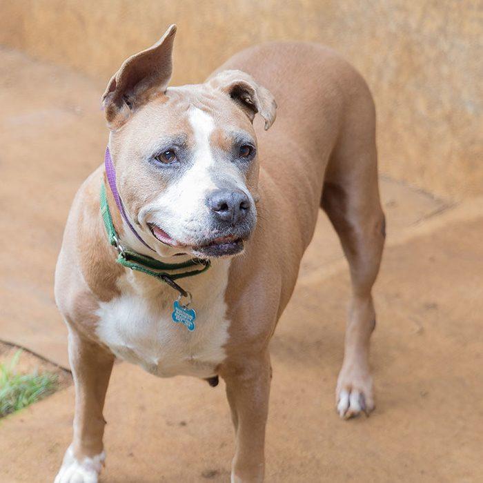 margo senior dog