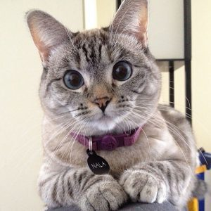 How This Cat Went from Shelter Animal to World Record Holder