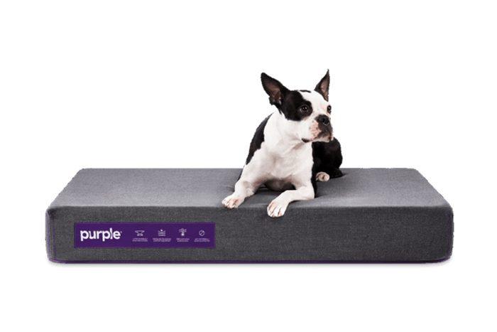 Purple Animal Bed