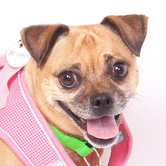 beignet senior dog