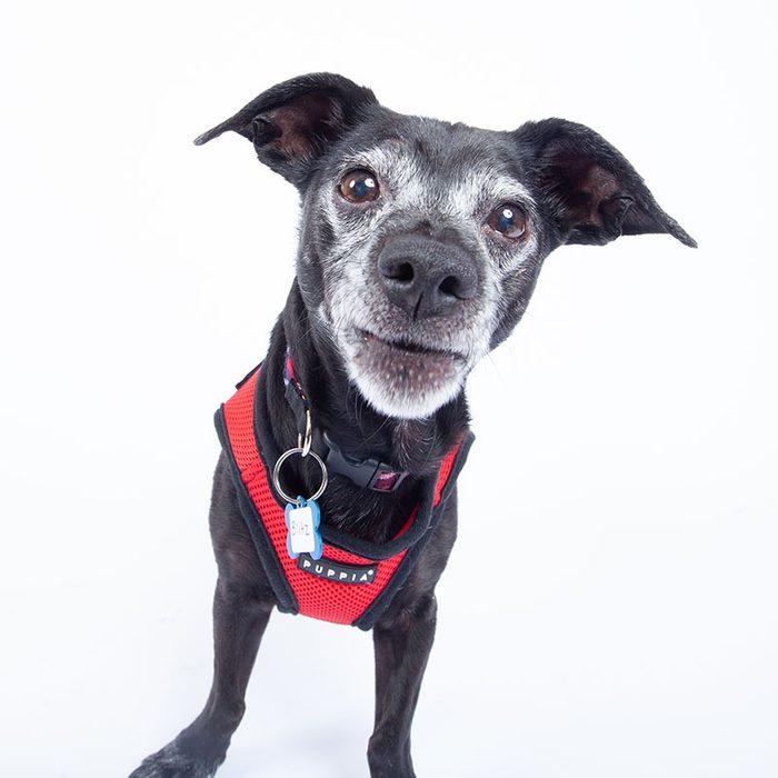 blitz senior dog