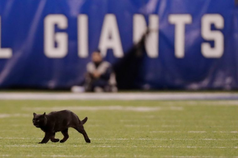 A cat runs on the field during the second quarter of an NFL football game between the New York Giants and the Dallas Cowboys, in East Rutherford, N.J Cowboys Giants Football, East Rutherford, USA - 04 Nov 2019
