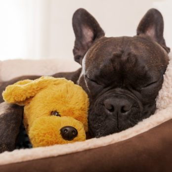 14 Best Dog Beds for Every Type of Dog