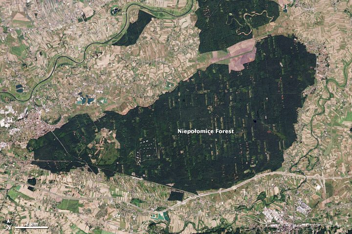royal forest nasa from space