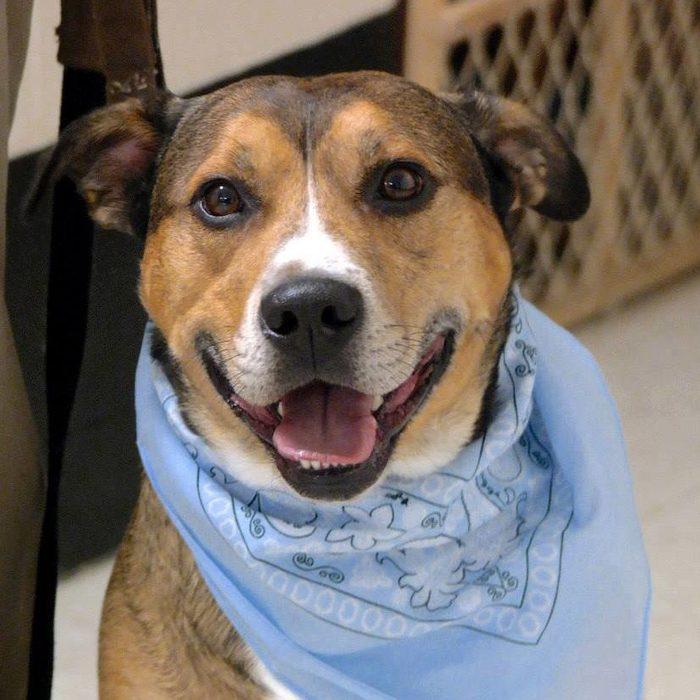 rocco senior dog