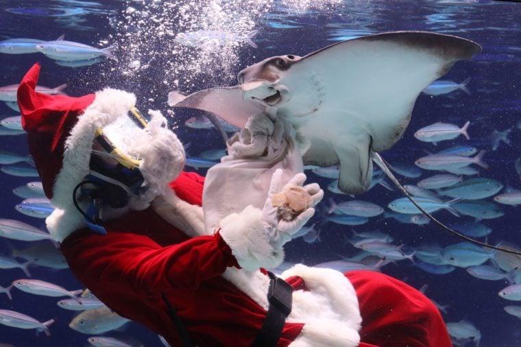 A diver in Santa Claus costume swims with fish in a fish tank at the Aquarium Santa Claus diver at Sunshine Aquarium, Tokyo, Japan - 14 Nov 2019