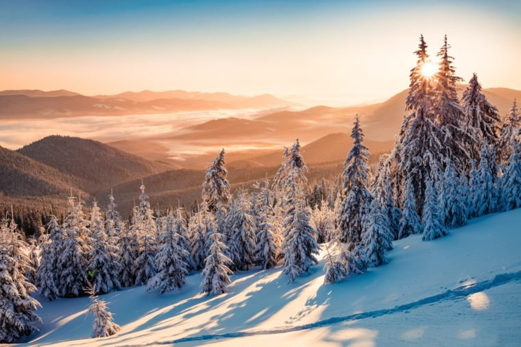 Impressive winter scene of Carpathian mountains with snow covered fir trees. Spectacular outdoor scene of moumtain forest. Beauty of nature concept background.