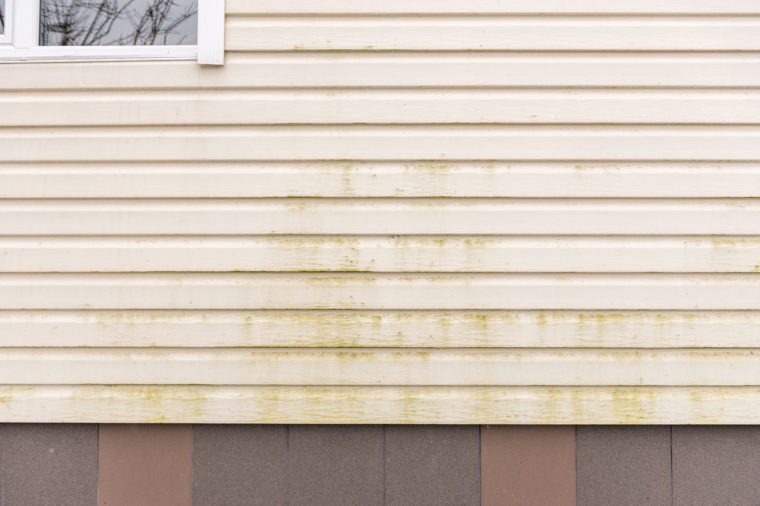 Mold and mildew on siding. Dirty wall of house