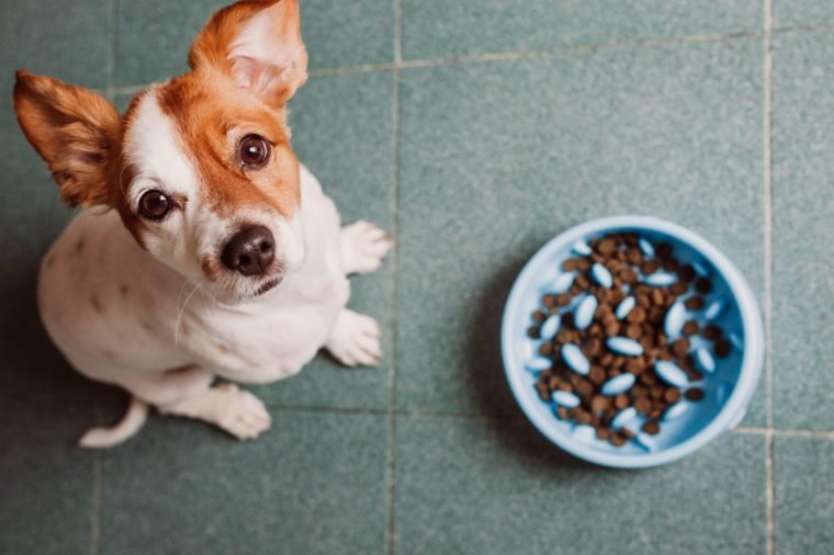 dog with slow feeder bowl