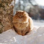 When Is It Too Cold for Cats to Go Outside?