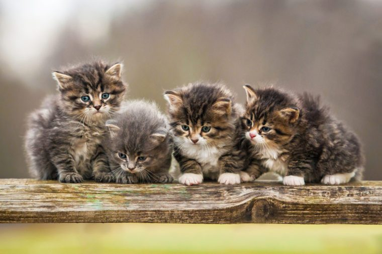 Four little kittens sitting on the fence
