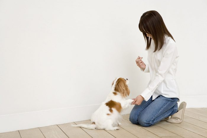 homeschool training dog