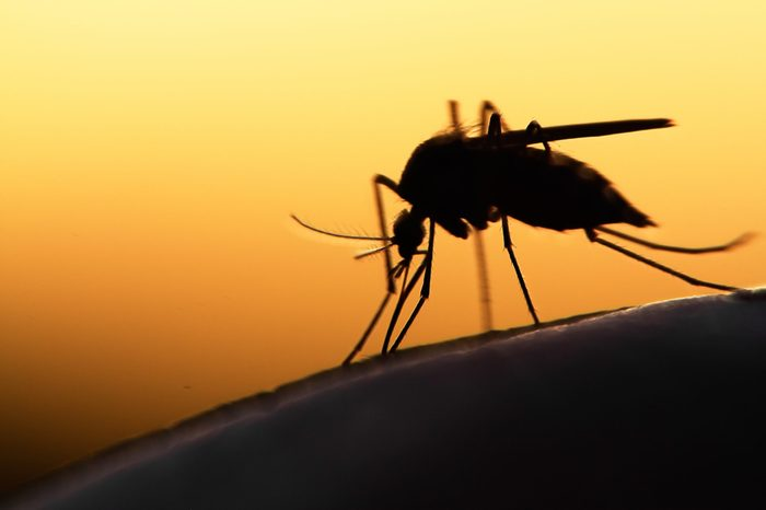 mosquito on human skin at sunset