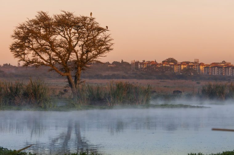 Dawn in Nairobi National Park with buildings in background