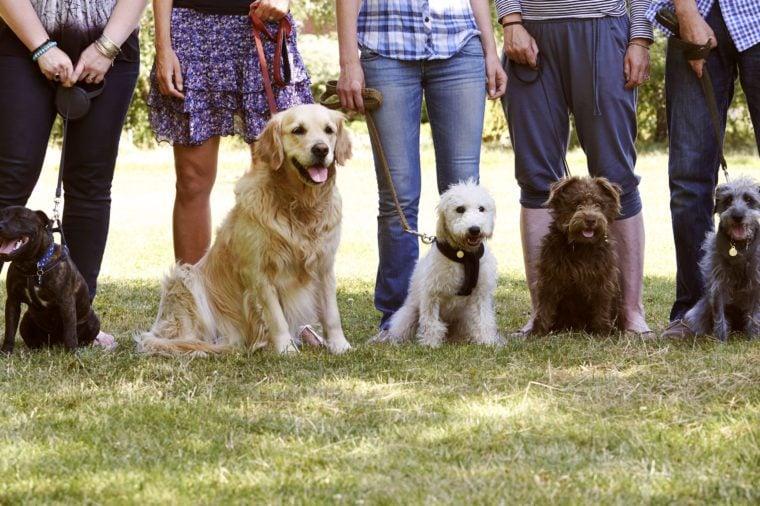 group dog training class