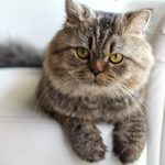 Can You Pass This Cat Trivia Quiz?