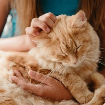 20 Things You Do That Your Cat Actually Hates