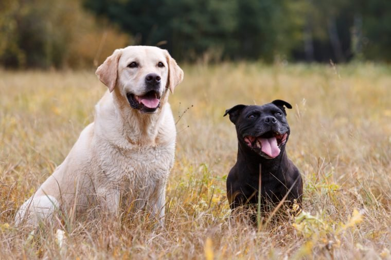 Two dogs of various breeds sitting on autumn meadow