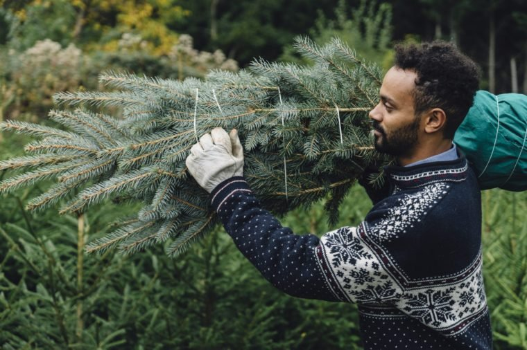 Young adult man choosing a Christmas tree at the farm outdoors