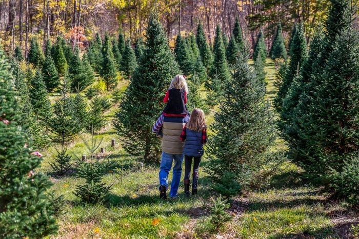 Father and Two Daughters Walking Through Christmas Tree Farm