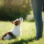 Dog Obedience Training: How to Find the Best Training School