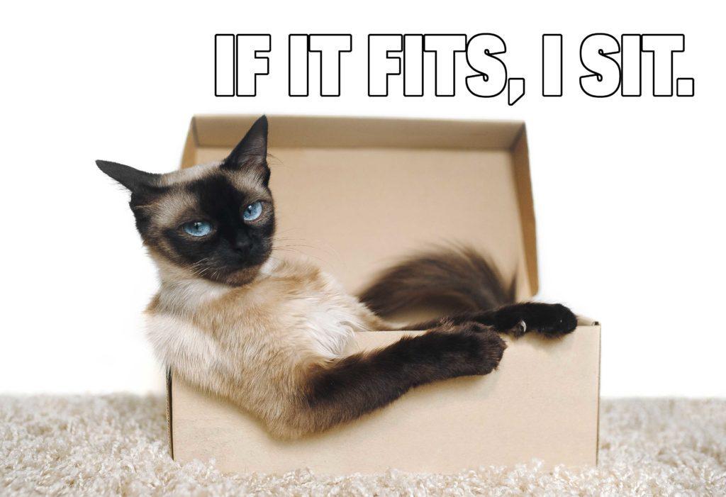 if it fits i sit cat memes funny