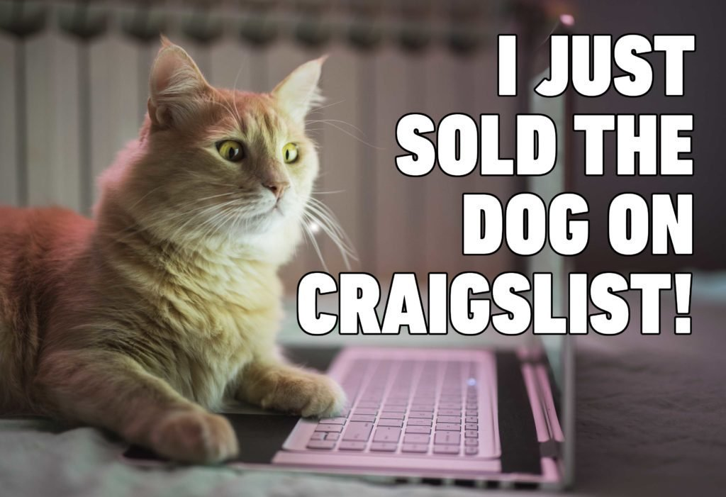 i just sold the dog on craigslist cat memes funny