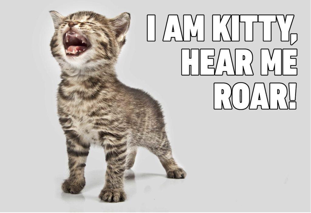 i am kitty hear me roar cat memes funny