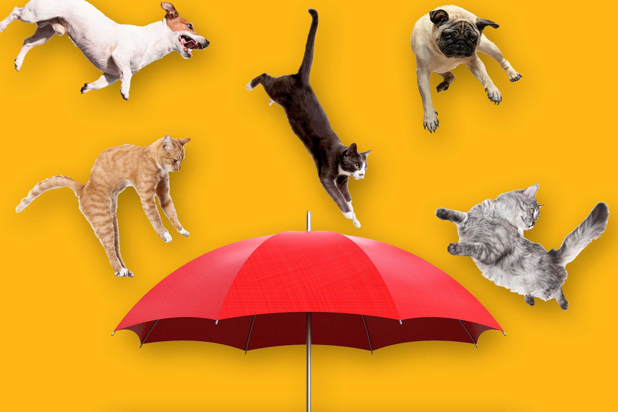 raining cats and dogs idiom
