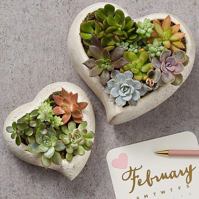 succulent hearts