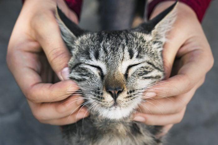 cat chin scratch