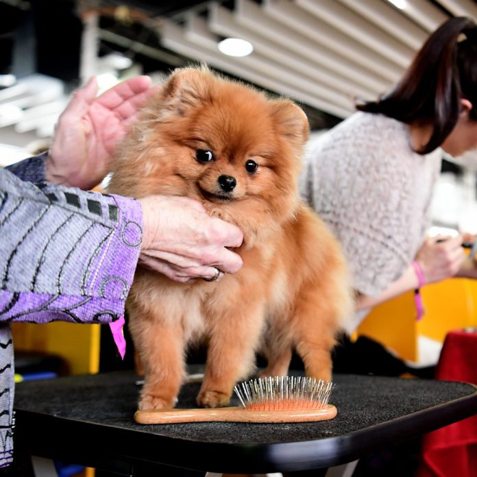 The 13 Funniest Names of Westminster Show Dogs