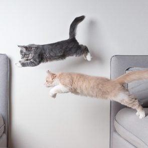 cats jumping