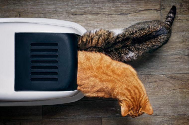 cats litter box