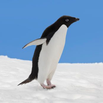 7 Penguin Secrets That Were Hidden for a Century