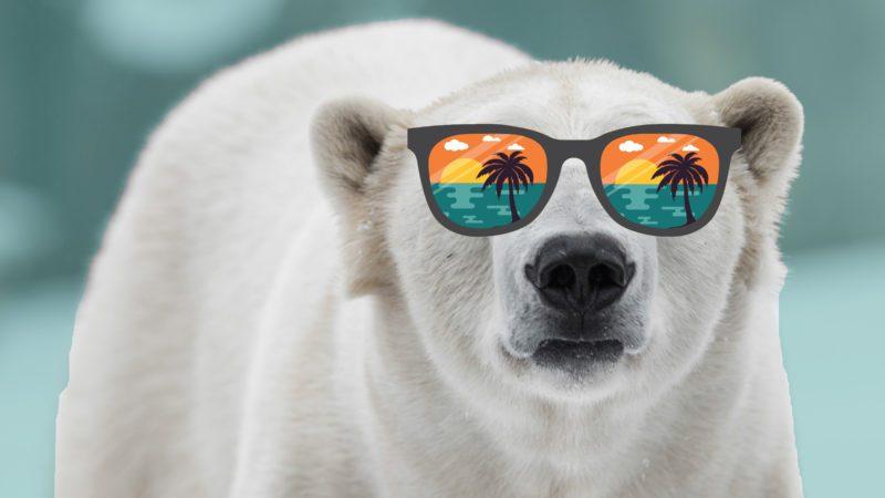 tropical polar bear