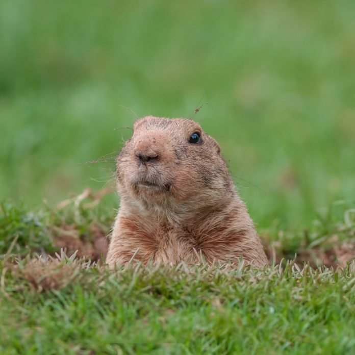13 Animals That Can (Supposedly) Predict the Weather