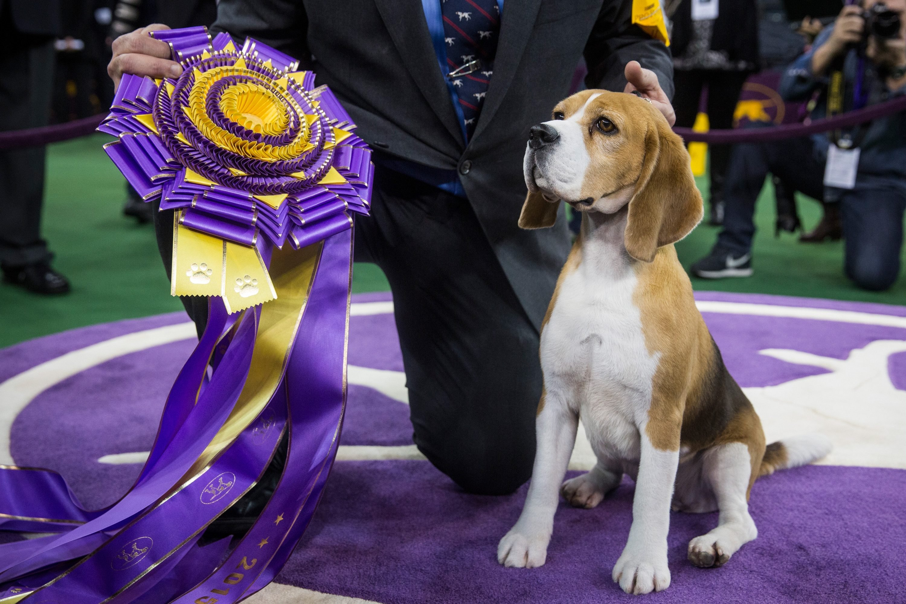 westminster dog show winner best in show prize