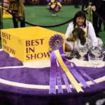Here's How Much Money Westminster Dog Show Winners Earn