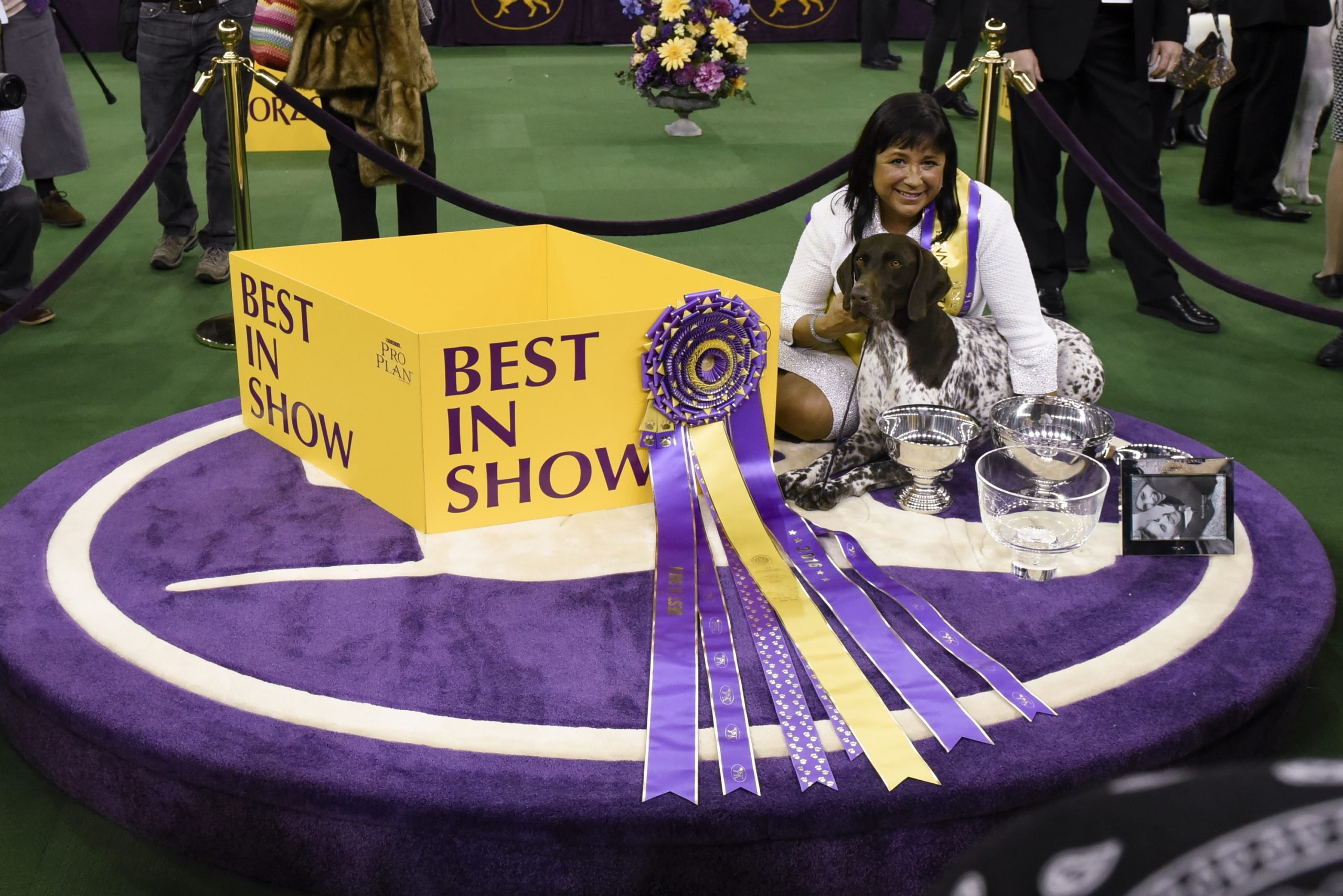 best in show westmisnter dog show
