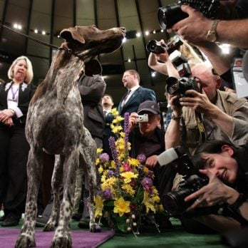 16 of the Most Unforgettable Images from the Westminster Dog Show
