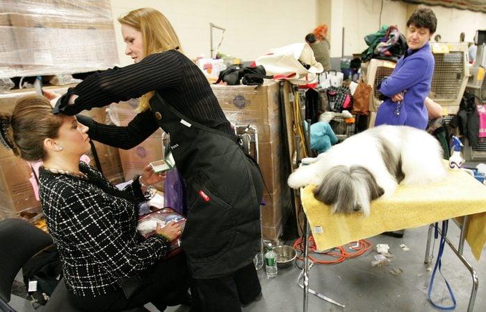 westminster dog show hair groomer